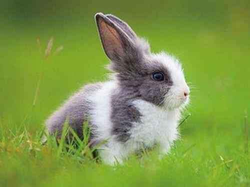 2、男兔女龙婚配合适吗视频:男兔女龙婚配好吗?