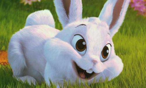 3、属羊与属兔的婚配如何:属羊白羊座和属兔双鱼座相配么?会幸福么?